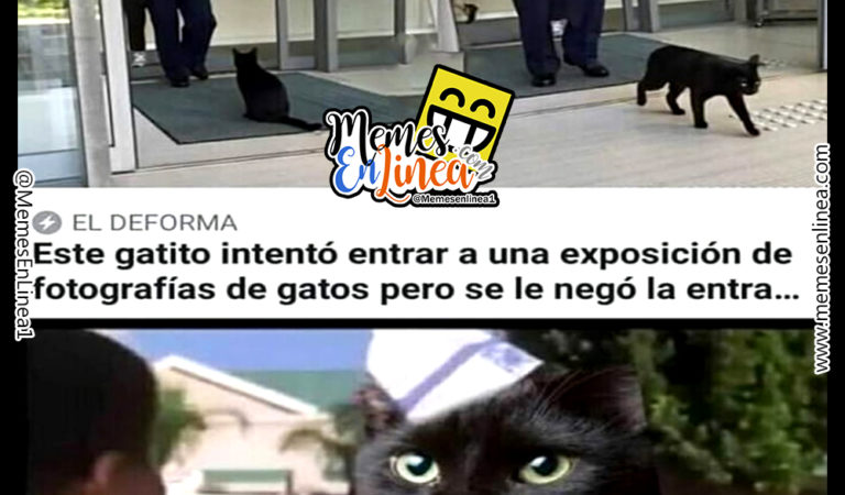 Pobre gatito – Es porque soy negro?